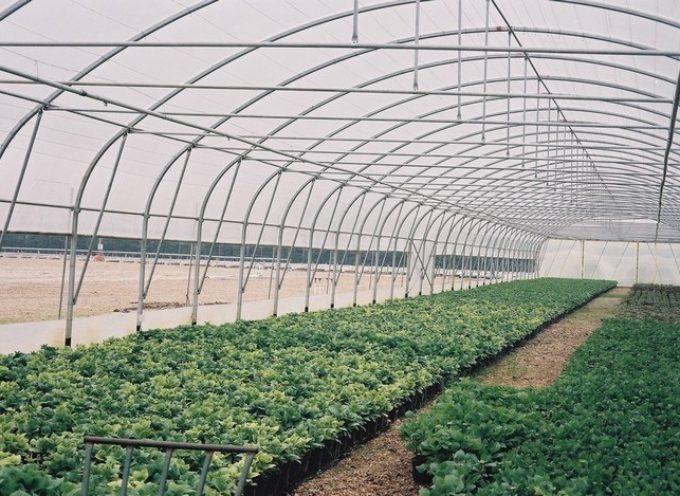 versilia – Furti di gasolio e razzie di ortaggi al Brentino, gli agricoltori dormono nelle serre