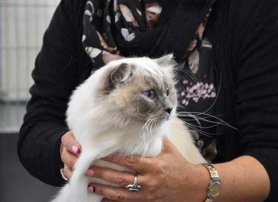 LUCCA –  I gatti più belli del mondo
