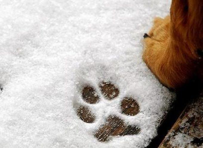 Zorra, simil Labrador nera con macchia bianca sul petto si è persa – Aiutiamo il suo anziano padrone a ritrovarla