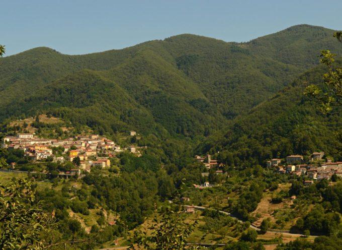 Sicurezza nei boschi, cinque interventi a Pescaglia e Borgo a Mozzano