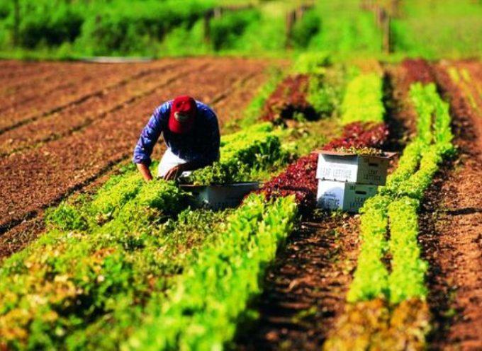 da campo a carrello agli agricoltori restano solo le briciole