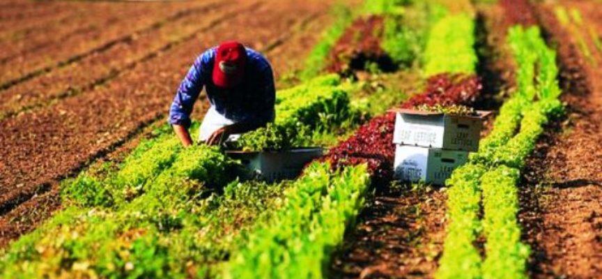 Emergenza Covid. Toscana: garanzia gratuita agli agricoltori che chiedono liquidità