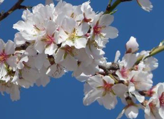CAPANNORI -Qualità dell'aria, revocata l'ordinanza sugli abbruciamenti all'aperto