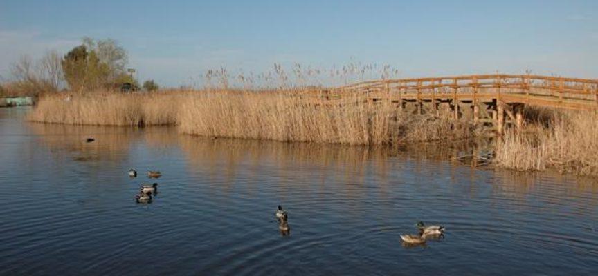 Stipulato un accordo fra corpo dei carabinieri e Lipu per combattere l'illegalità ambientale