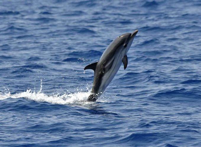 Moria di delfini lungo le spiagge della Toscana