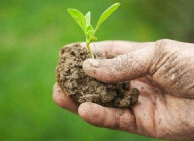 lucca – Come ottenere energia pulita dai fanghi di depurazione e dai rifiuti organici:
