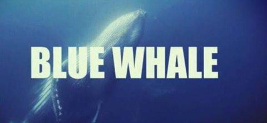 BLUE WHALE, QUESTO NON è UN GIOCO