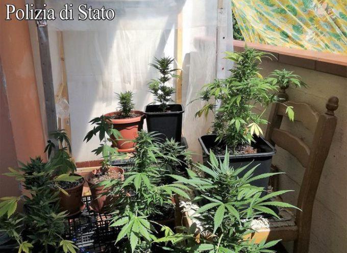 QUESTURA DI LUCCA – SCOPERTE  Due coltivazioni di marijuana in due giorni: