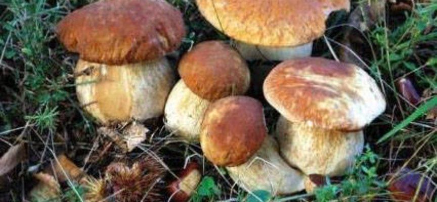 Gruppo Micologico Danesi di Ponte a Moriano presenta i sei nuovi corsi regionali di funghI