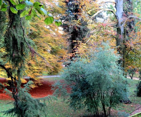 L' Orto Botanico di Lucca.
