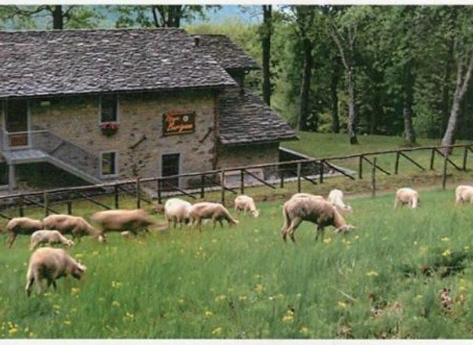 10 giugno 2017 Festa della Transumanza Le pecore sono arrivate dal Sillico in Appennino