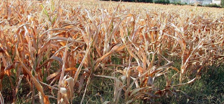 Emergenza siccità, allarme di Coldiretti