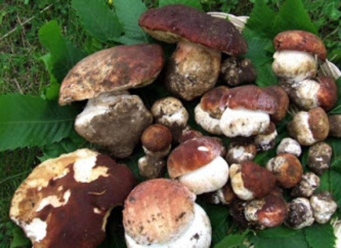 Pescia , due persone sanzionate per la raccolta di funghi nel giorno vietato