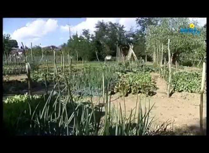 Terreni abbandonati a disposizione di tutti per realizzare degli orti