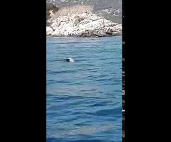 Ambiente. Il Mediterraneo continua a sorprendere: turisti leccesi filmano esemplare di foca monaca nella acque ioniche della baia di Lefkas in Grecia