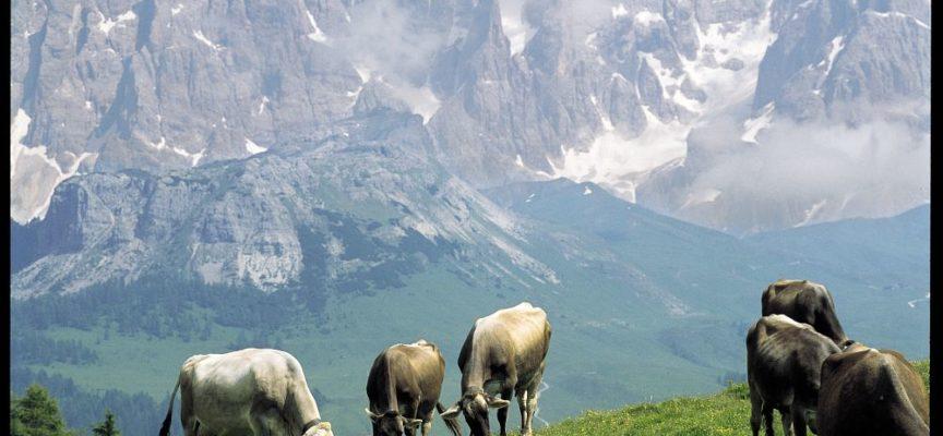 Accanto al latte crudo, l'altro grande tema che affronta Cheese 2017 sono gli alimenti naturali o liberi.