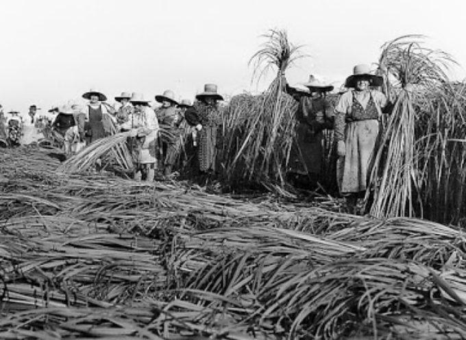C'era una volta la canapa. Testimonianze e fatti storici sulla coltivazione della canapa in Garfagnana