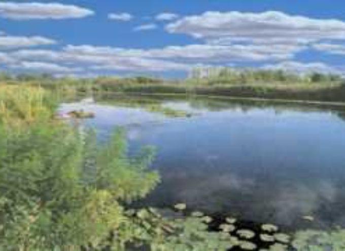 """Sibolla, Baccelli (Pd): """"Prevedere azioni per la gestione e valorizzazione della Riserva naturale"""