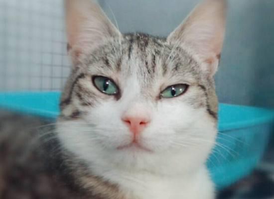 Gatti abbandonati, è emergenza a Pistoia. Accolti 1.600 mici nel 2016, solo 700 hanno trovato una casa