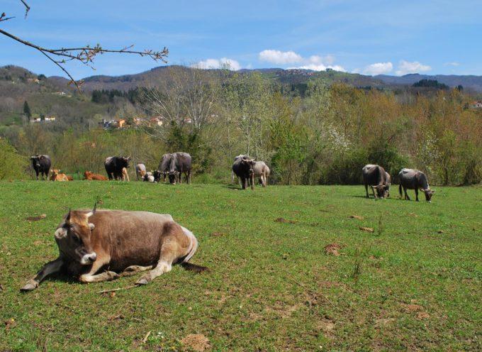 GARFAGNANA – NATURA E AGRICOLTURA SI UNISCONO