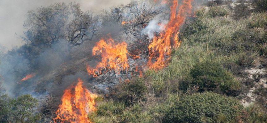 Bilancio catastrofico per i boschi toscani