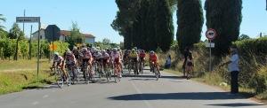 Corsa - Trofeo Carlo Alberto Pellegrini