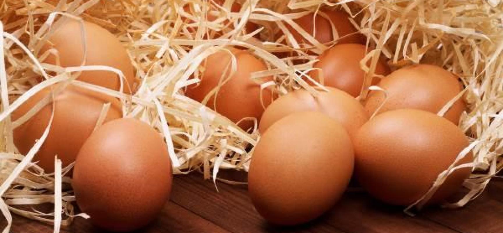 Uova contaminate dall'insetticida Fipronil, riunione UE