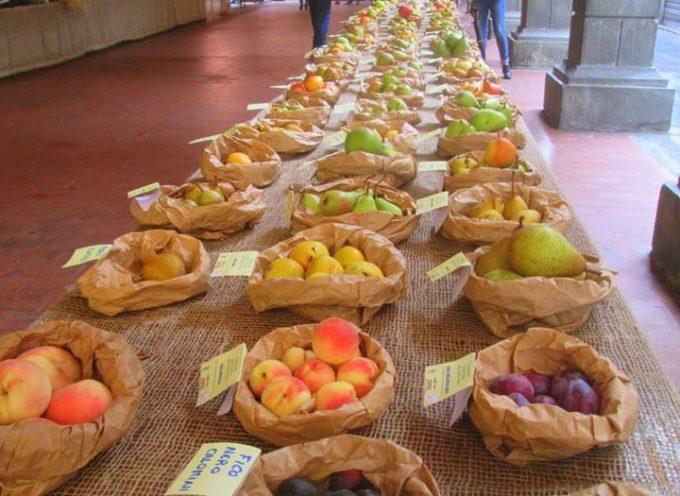 Notevole successo per la festa dei frutti antichi ideata e creata da Ivo Poli