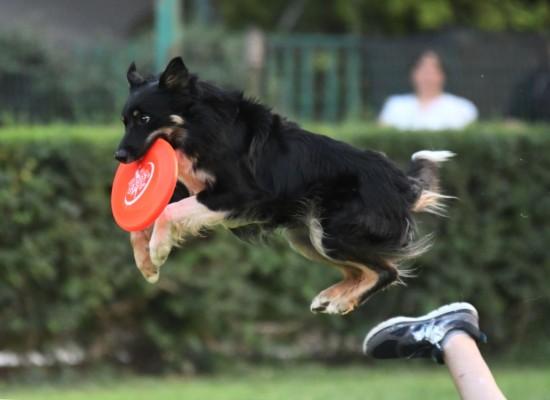 DOMENICA 24 SETTEMBRE A SAN GINESE LA TAPPA DI CAMPIONATO ITALIANO DISC DOG