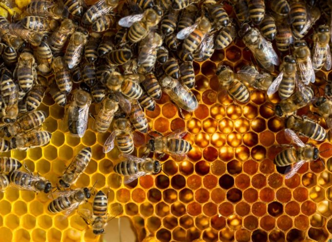 Miele: annata drammatica in lucchesia, produzione in picchiata (-80%)