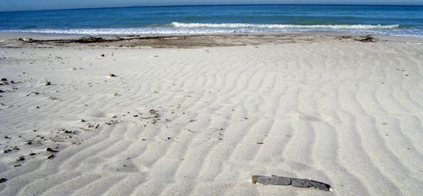 Ammoniaca e moria di pesci nelle bianche spiagge caraibiche di Rosignano