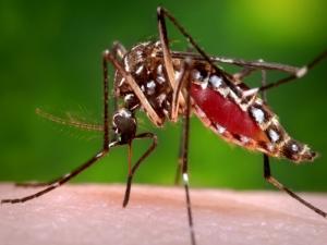 zanzara national