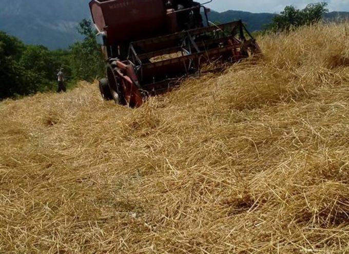 LA TREBBIATURA DEL FARRO IN GARFAGNANA