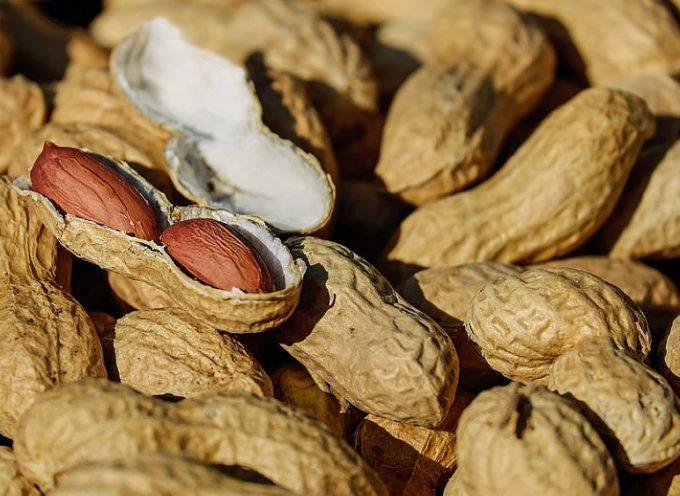 Arachidi o noccioline americane. Piccoli semi ricchissimi di proprietà nutrizionale e ottime per i bambini