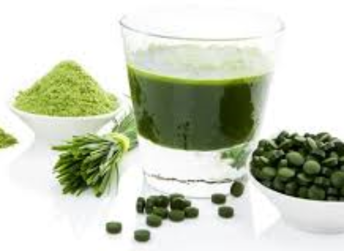 Mangia-bevi-ama l'alga  Clorella