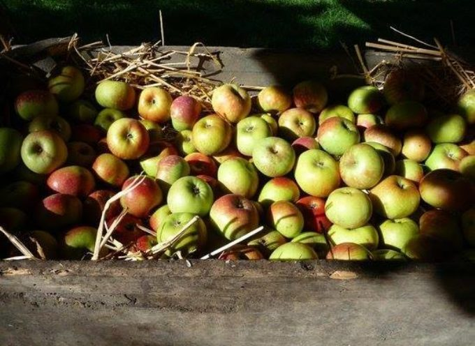 Le scorte dell'autunno… come le formiche i nostri nonni  si mettevano i cibi in granaio per il lungo inverno
