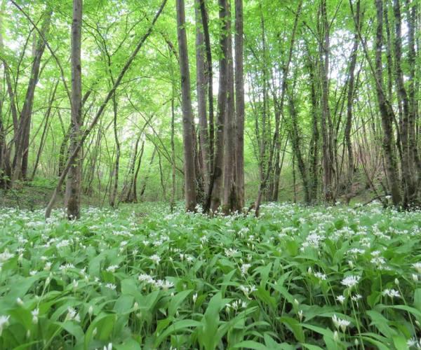 L'azienda Tarabori di Altopascio realizzerà un corridoio ecologico e un laghetto
