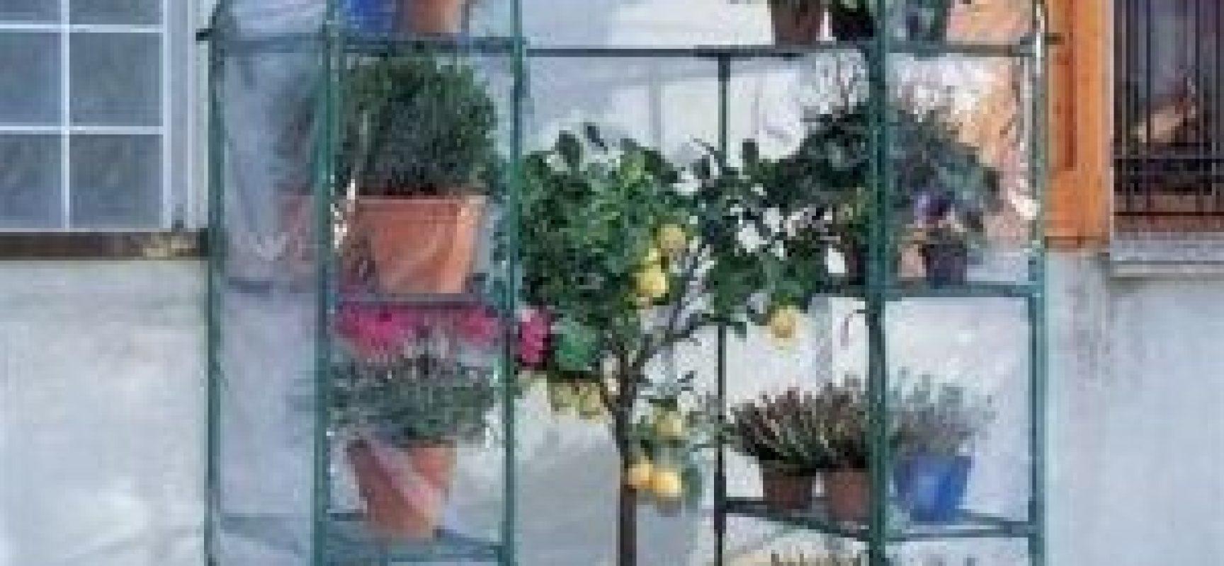 Come proteggere le piante dal gelo invernale | Verde Azzurro – Notizie