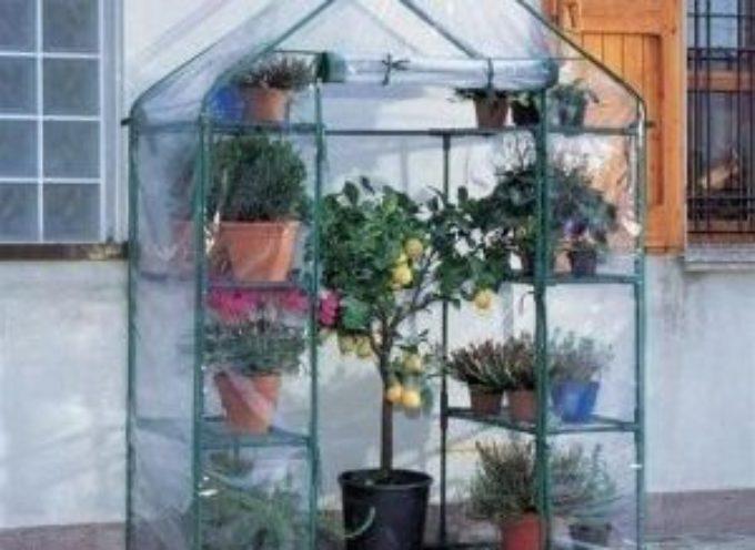 Come proteggere le piante dal gelo invernale