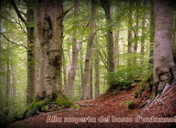 ALLA SCOPERTA DEL BOSCO D'AUTUNNO