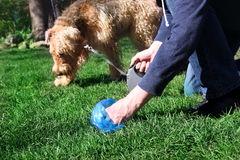 equipaggi-il-selezionamento-su-che-pulisce-gli-escrementi-animali-del-cane-94891379