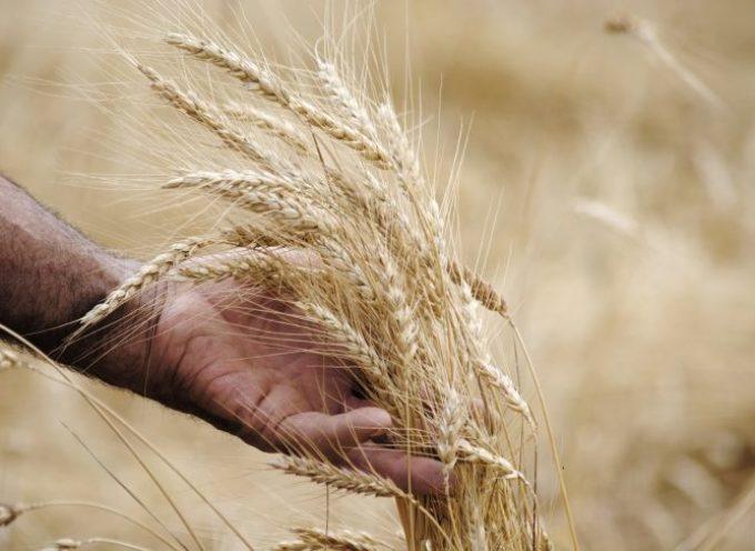 Il diritto di sapere da dove viene il grano