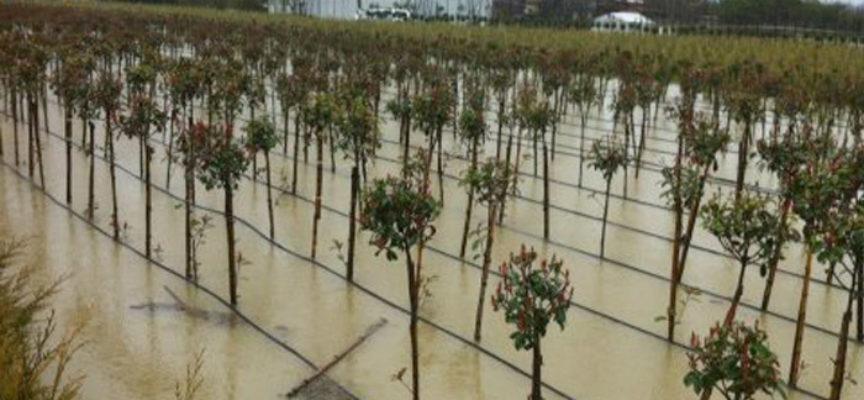 LUCCA – Eventi calamitosi 2013-2015 in Toscana: ultimi giorni per la richiesta di contributi