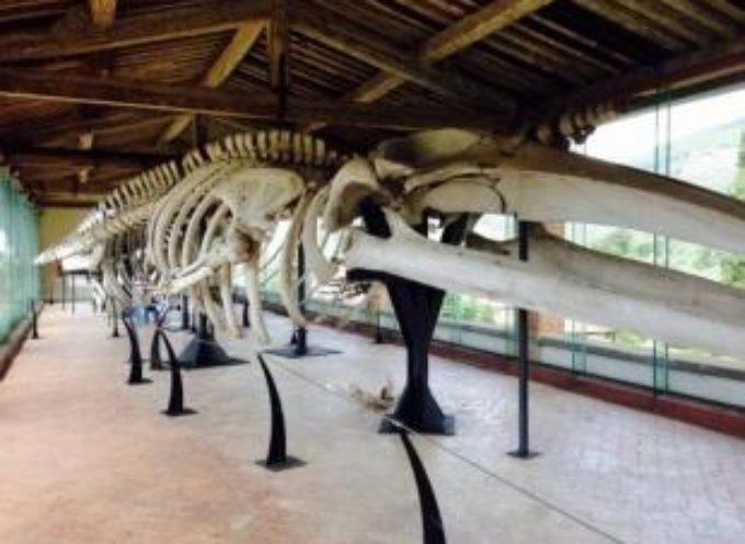 CAPANNORI – VISITE GUIDATE AL MUSEO DI CALCI