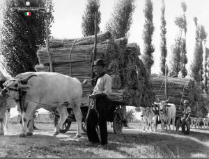 trasportoi della canapa