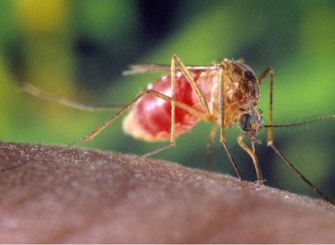 """Virus Febbre del Nilo occidentale in rapido aumento nelle ultime settimane. In Italia registrati 53 casi umani di """"West Nile"""""""