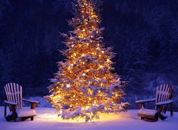 gli Alberi di Natale particolari 2017