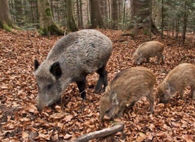 Superare l'emergenza ungulati. In Toscana il patto fra agricoltori e cacciatori