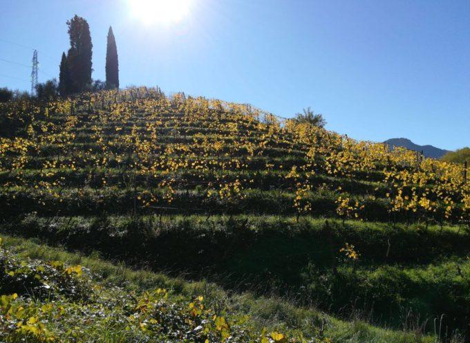 escursione al  Bargiglio ed il vino Biodinamico di Macea