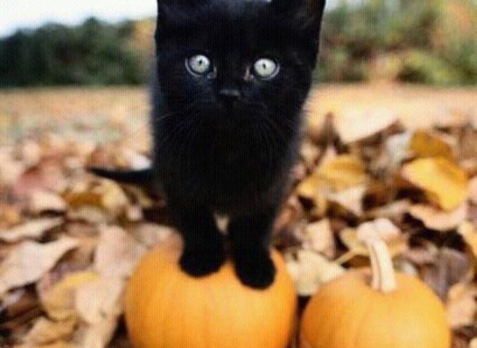 Il giorno del gatto nero. IL 17 NOVEMBRE